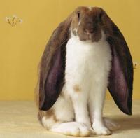 bunny_mosaic.png